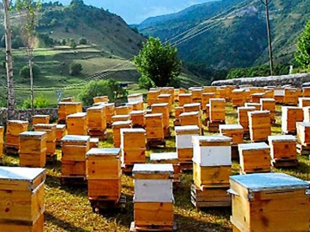Arıcılık ve Bal Üretimi