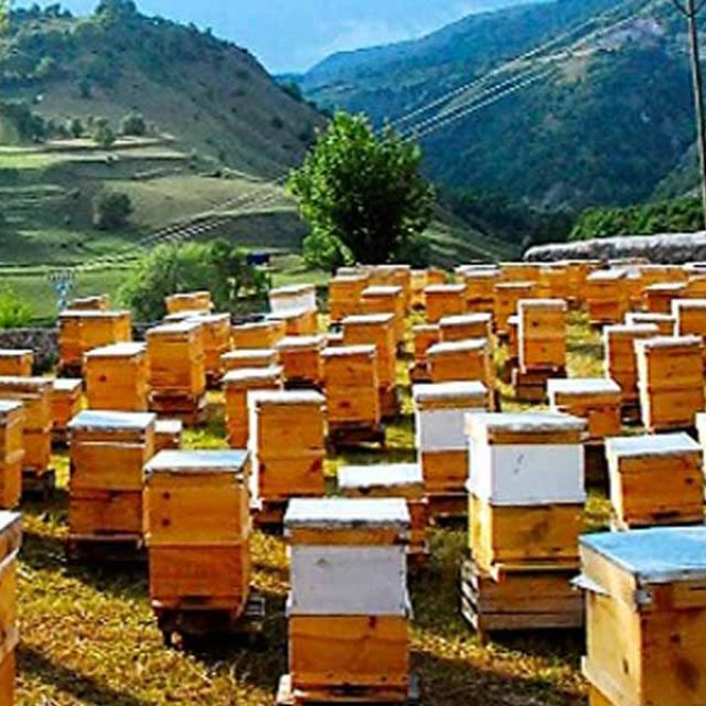 Beekeeping and Honey Production